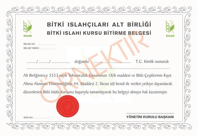 sertifika son