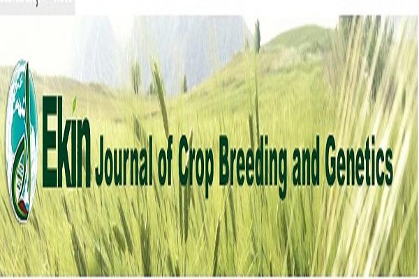 Ekin Journal 4. Sayisı çıktı