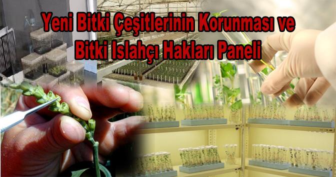Bitki Islahçıları ve Hukukçular 11 Nisan'da Antalya'da buluşuyor